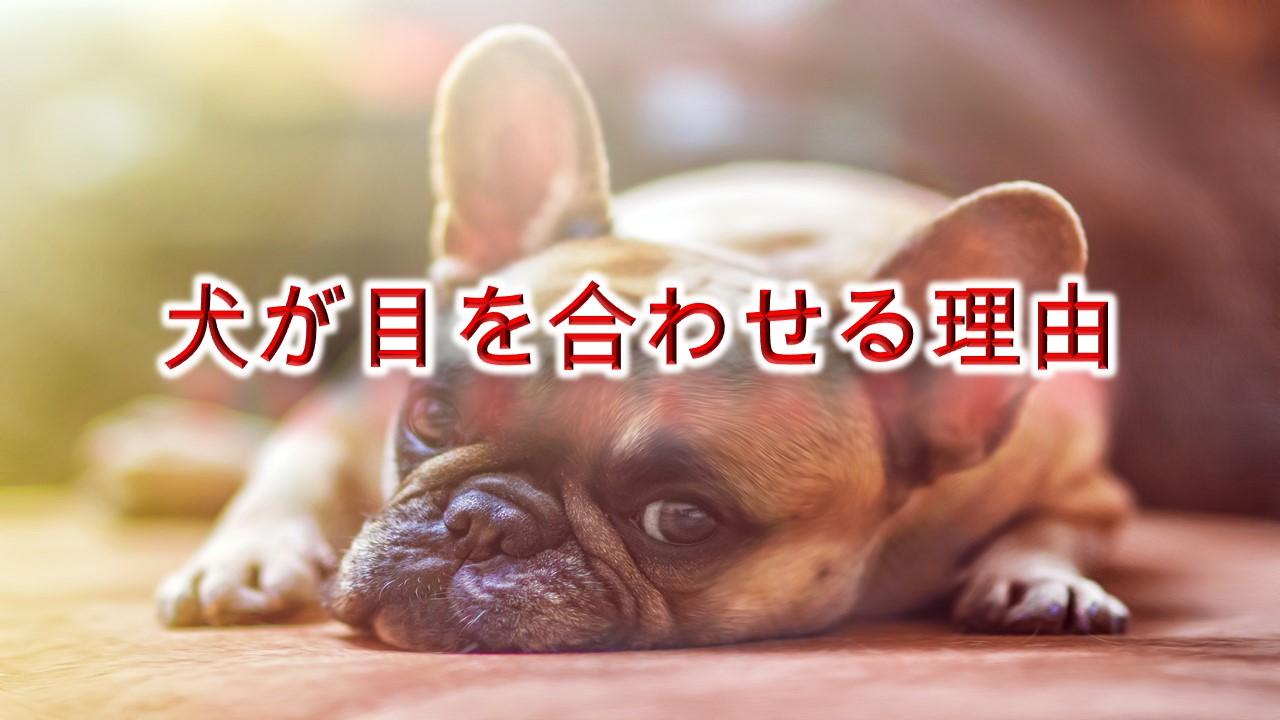 犬が目を合わせる理由