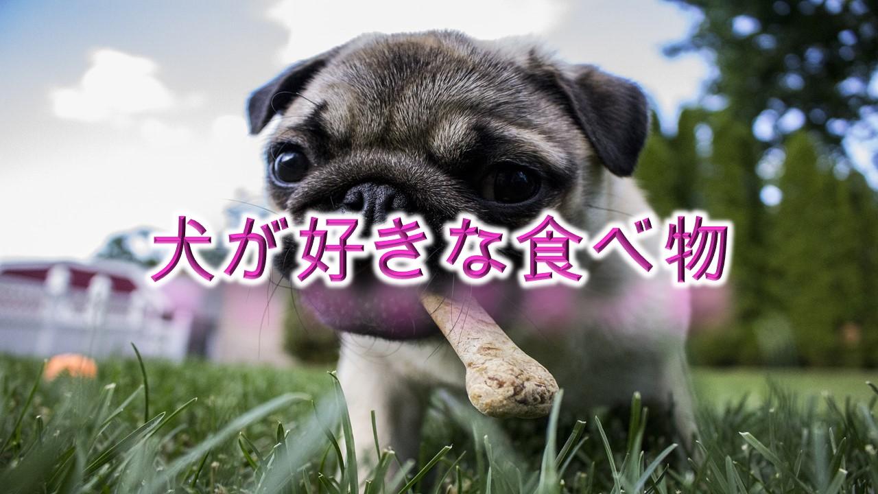 犬が好きな食べ物とは?