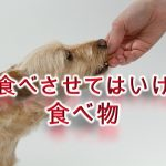 危険!犬に食べさせてはいけない食べ物まとめ【死亡リスクのある食品や、犬の健康に良くない食品など】