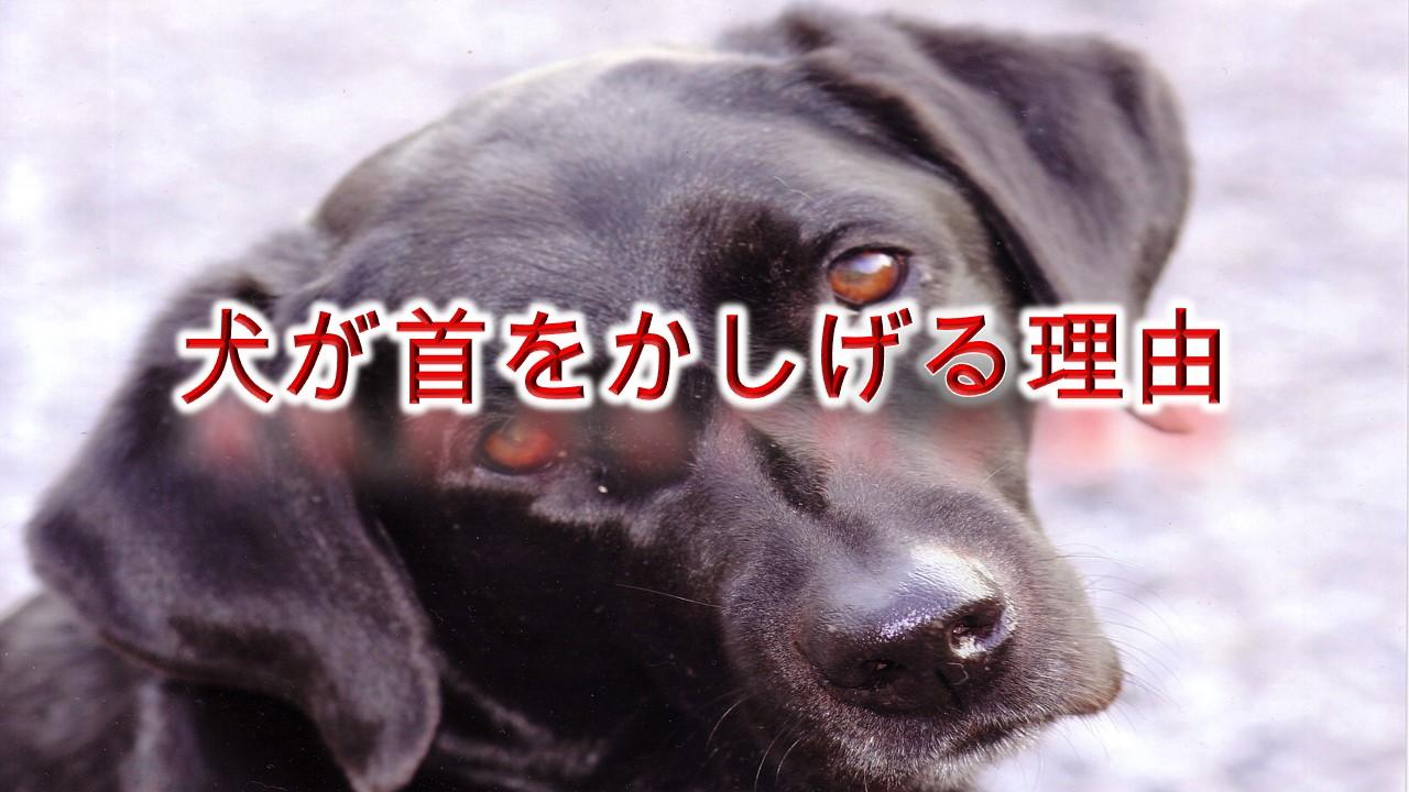 犬が首をかしげる理由【犬が首を傾げる行動には、病気が関係している!?】