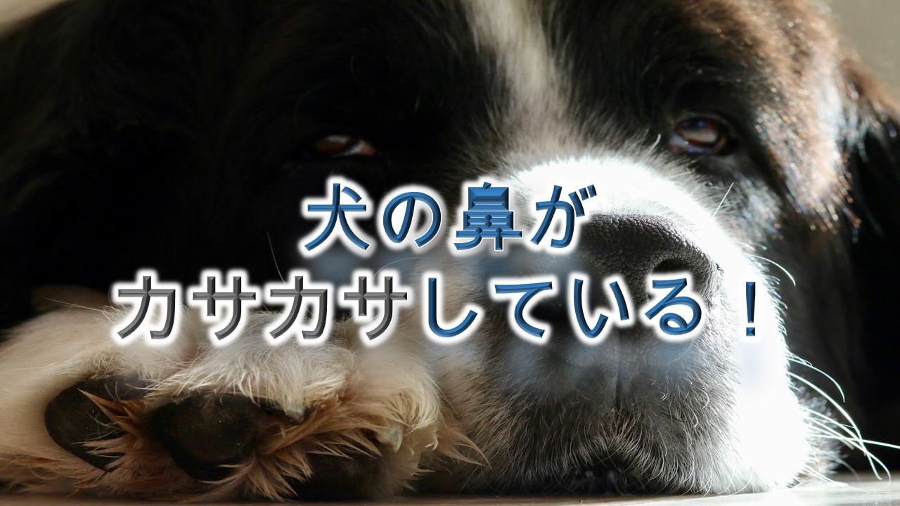 犬の鼻がカサカサしてる!【犬の鼻が乾燥してる時の注意点】