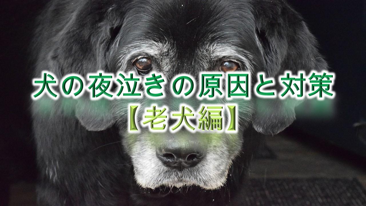 犬の夜泣きの原因と対策【老犬編】