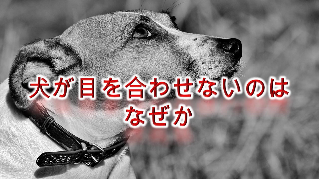 犬が目を合わせないのはなぜか?【犬が目をそらす理由】
