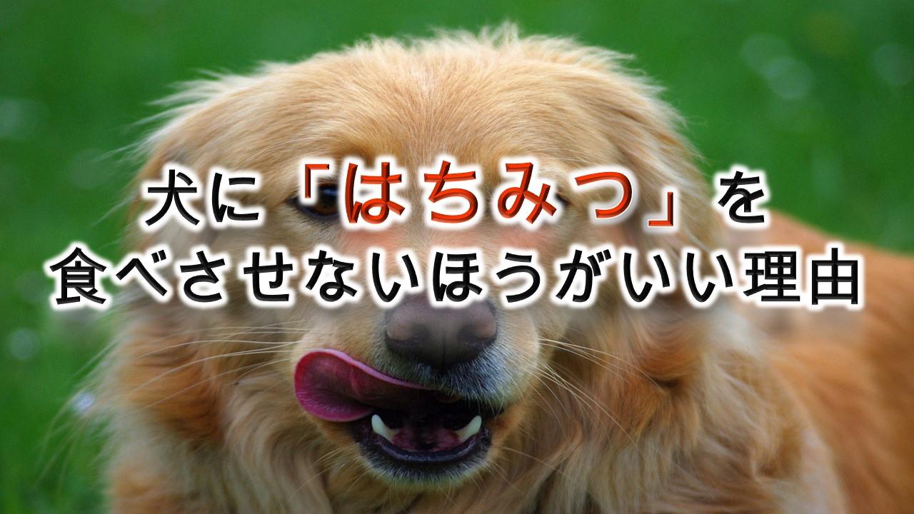 犬に「はちみつ」を食べさせない方がいい理由