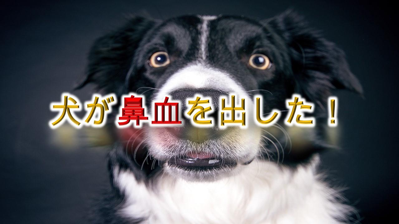 犬が鼻血を出した!【原因と対応策について】
