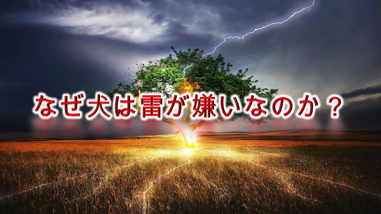 なぜ犬は雷を怖がるのか?【雷に震える愛犬を落ち着かせる方法も解説】