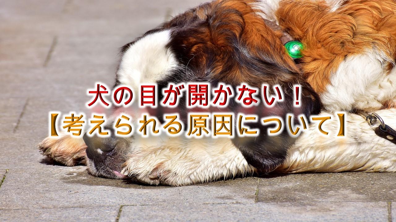 犬の目が開かない!【考えられる原因について】