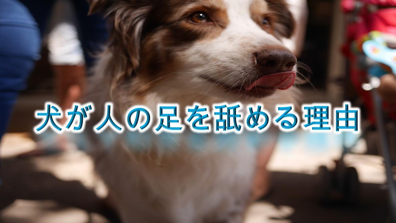 犬が人の足を舐める理由