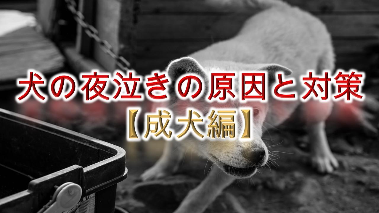 犬の夜泣きの原因と対策【成犬編】