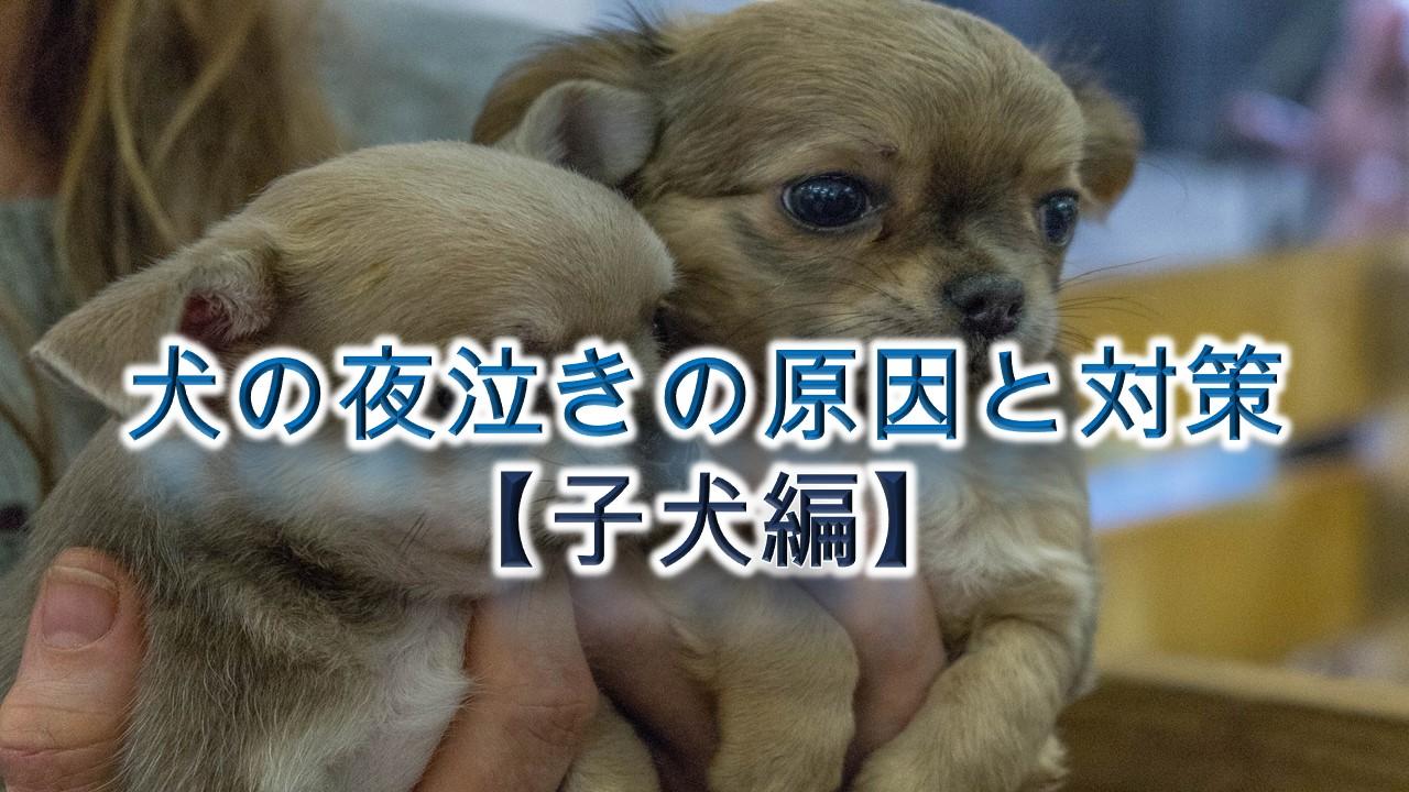 犬の夜泣きの原因と対策【子犬編】