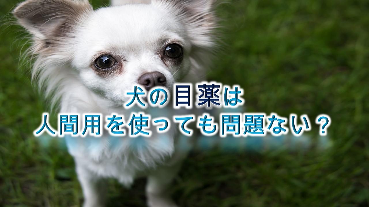 犬の目薬は人間用を使っても問題ない?