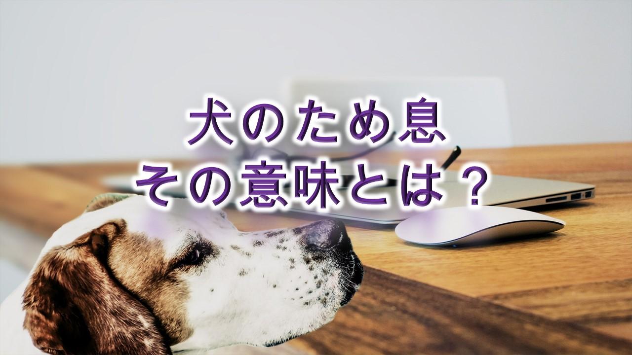 犬のため息、その意味とは?【ただの鼻息ではない!】