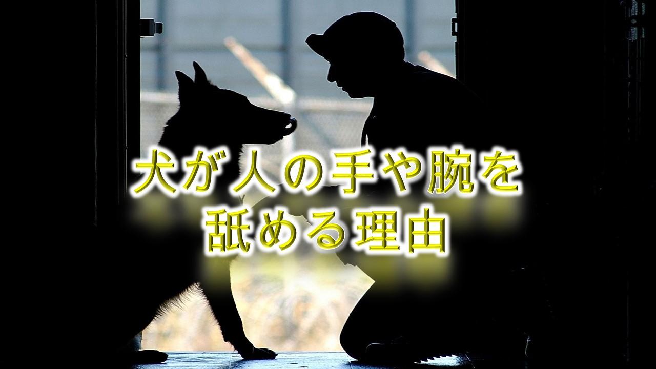犬が人の手や腕を舐める理由【犬の気持ちを理解していますか?】