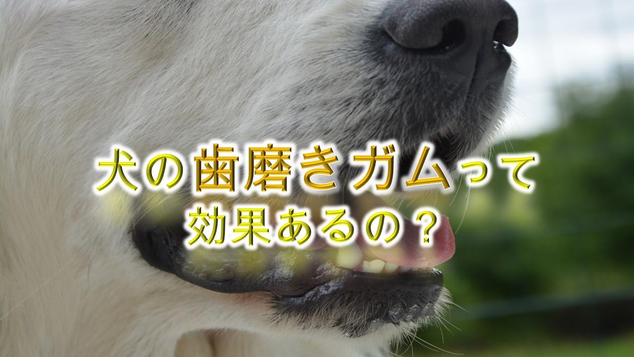 犬の歯磨きガムとは何か。【効果あるの?もう歯ブラシは必要ない!?】