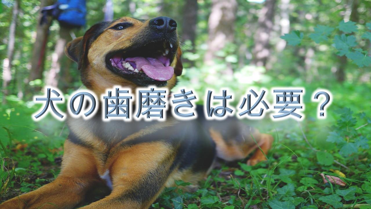 犬の歯磨きの適正頻度とは?そもそも必要?【犬に歯磨きをしないリスクや危険性も紹介】