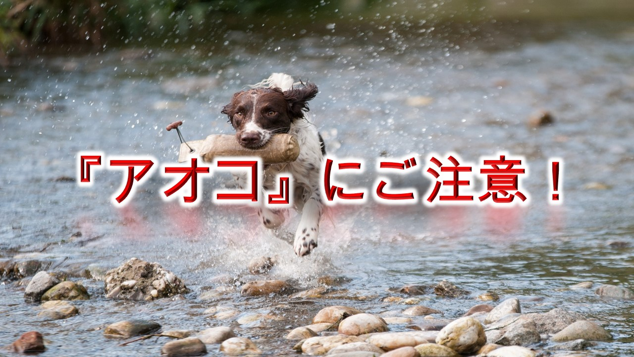 「アオコ」とは何か?【犬との散歩中、水辺で遊ぶ際はご注意を!】