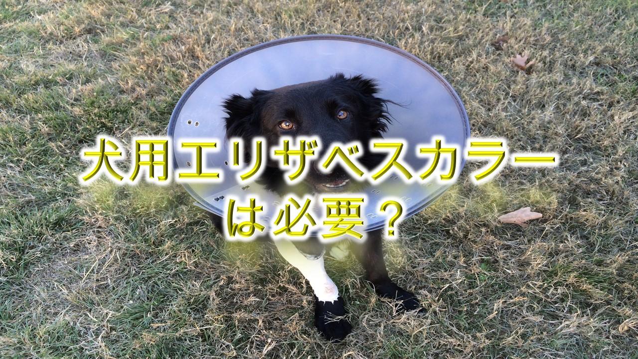 犬用エリザベスカラーとは何か?必要?【メリットとデメリットも解説】