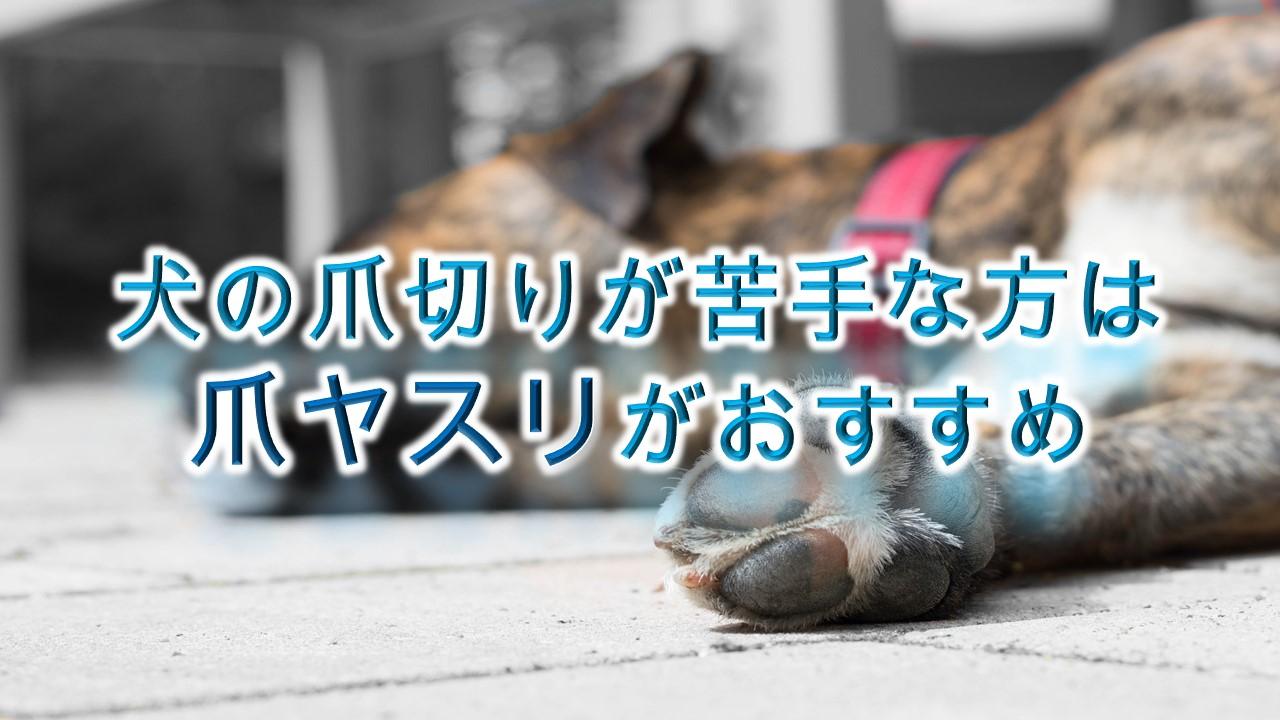 犬の爪切りが苦手な方は、爪ヤスリがオススメです!