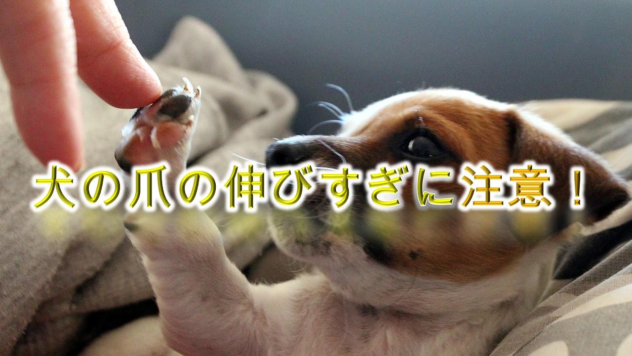 犬の爪の伸びすぎは危険!適正な長さはどのくらい?【犬の爪切りの適正な頻度も解説】
