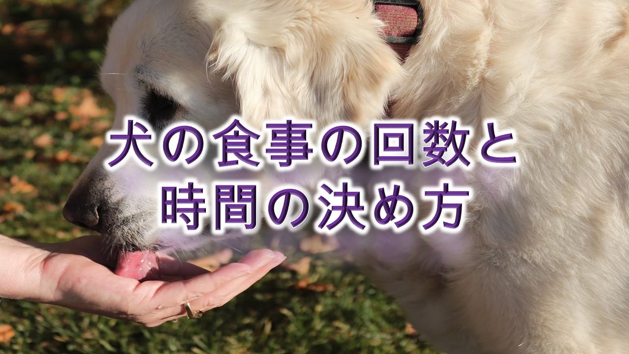 犬の食事の回数は、一日何回が1番いい?【犬に食事を与える時間の決め方も解説】