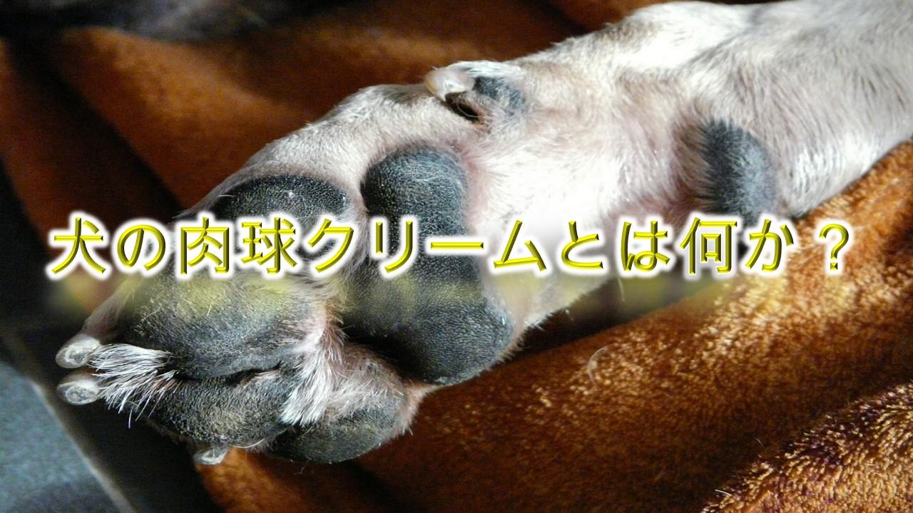 犬の肉球クリームとは何か?【使用することで得られる効果もわかりやすく解説】