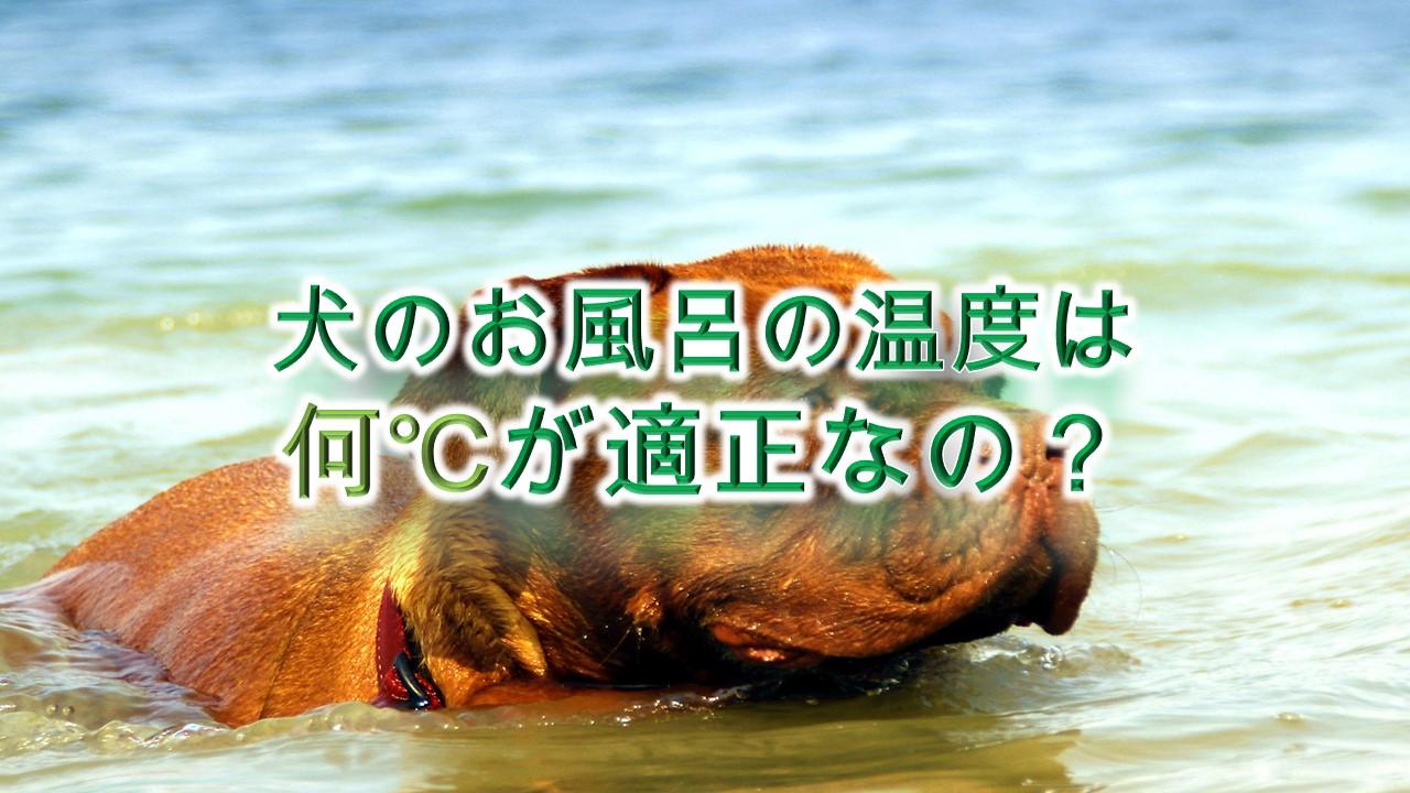 犬のお風呂の温度は何℃が適正なの?【温度が高すぎると危険!?】