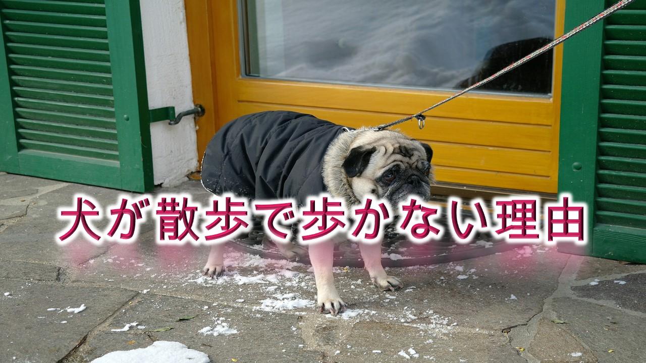 犬が散歩で歩かない理由【立ち止まって動かない時の対策も解説】