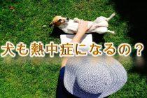 犬も熱中症になる?症状や対策も解説【夏に犬の散歩をする際は特に注意!】