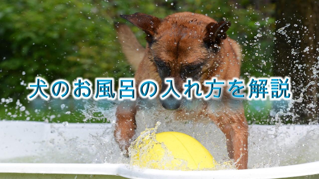 犬のお風呂の入れ方を解説【湯船にはいれるべき?】