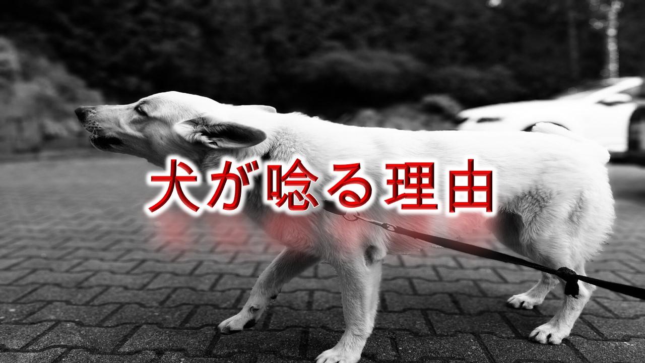 犬が唸る(うなる)理由や意味とは?しつけ方も紹介【唸り声の種類によって意味が違う!】
