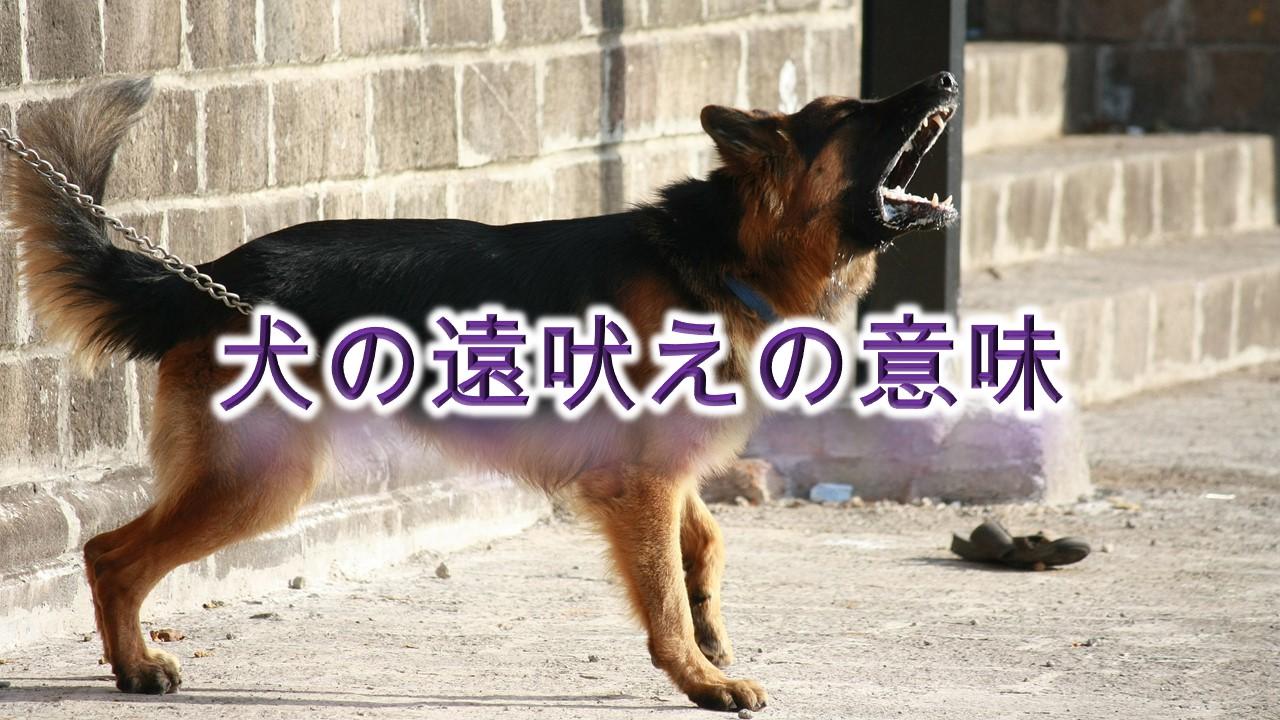 犬の遠吠えの意味とは?寂しい?【犬が遠吠えをする理由や原因を知り、対策を。】
