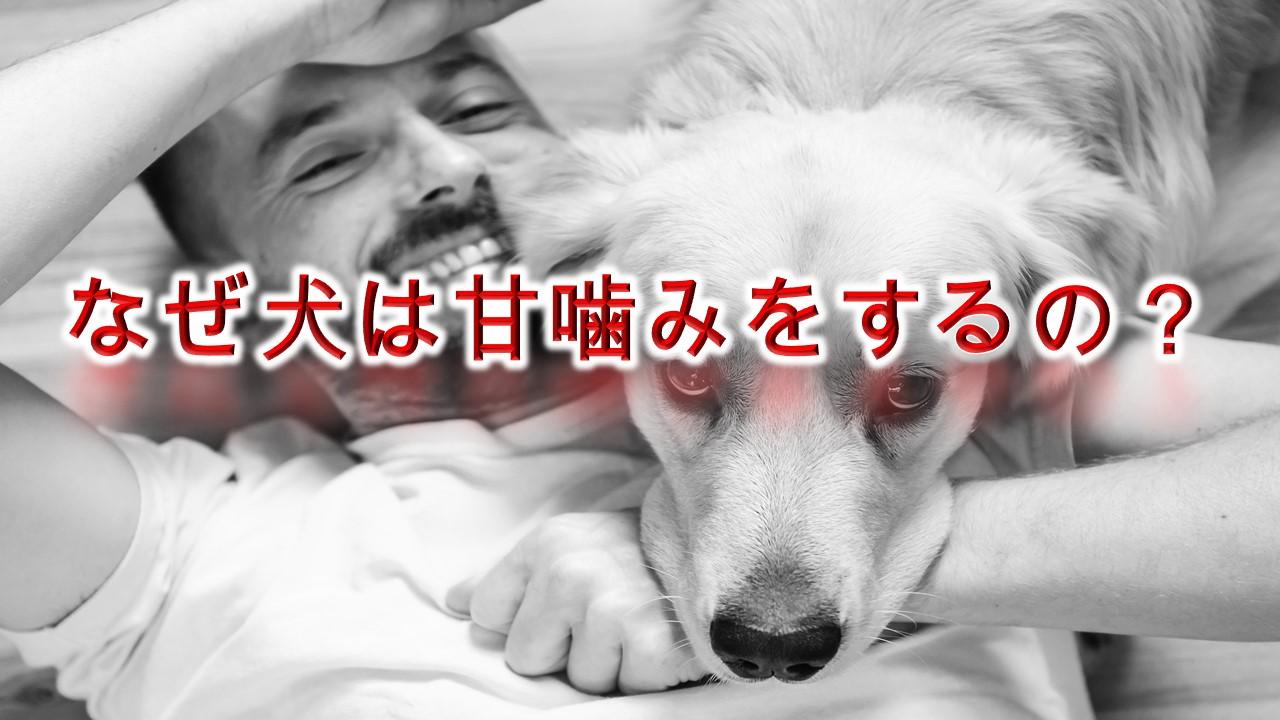 なぜ犬は甘噛みするの?【犬が甘噛みをする理由】
