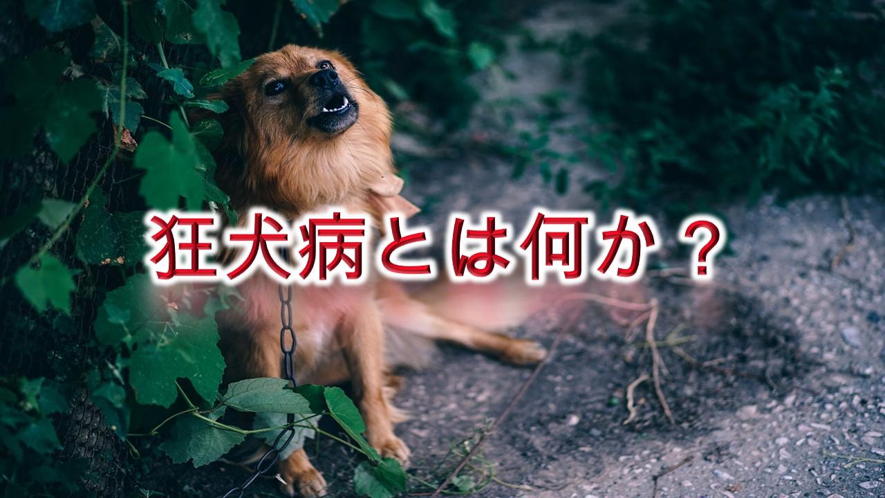 狂犬病とは何か?【その意味や症状などをわかりやすく解説】