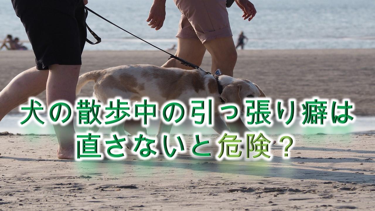 犬の散歩中の引っ張り癖は直さないと危険?【犬の引っ張り癖を直す方法】