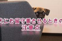 犬にお留守番させるときの注意点【隠しておいたほうがいい物など】
