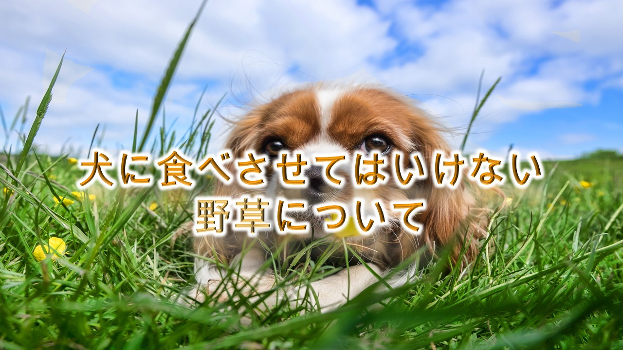 【危険】犬に食べさせてはいけない野草について。