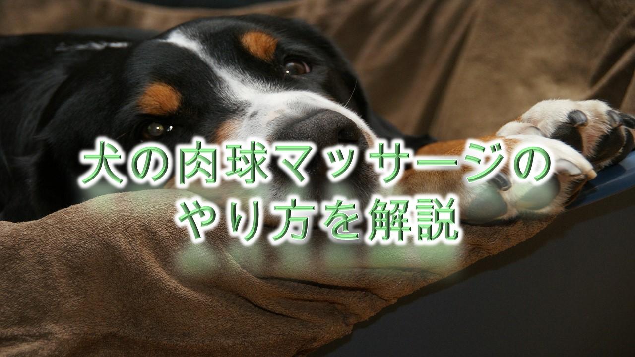 犬の肉球マッサージのやり方を解説【注意点や犬が喜ぶツボも紹介しています♪】
