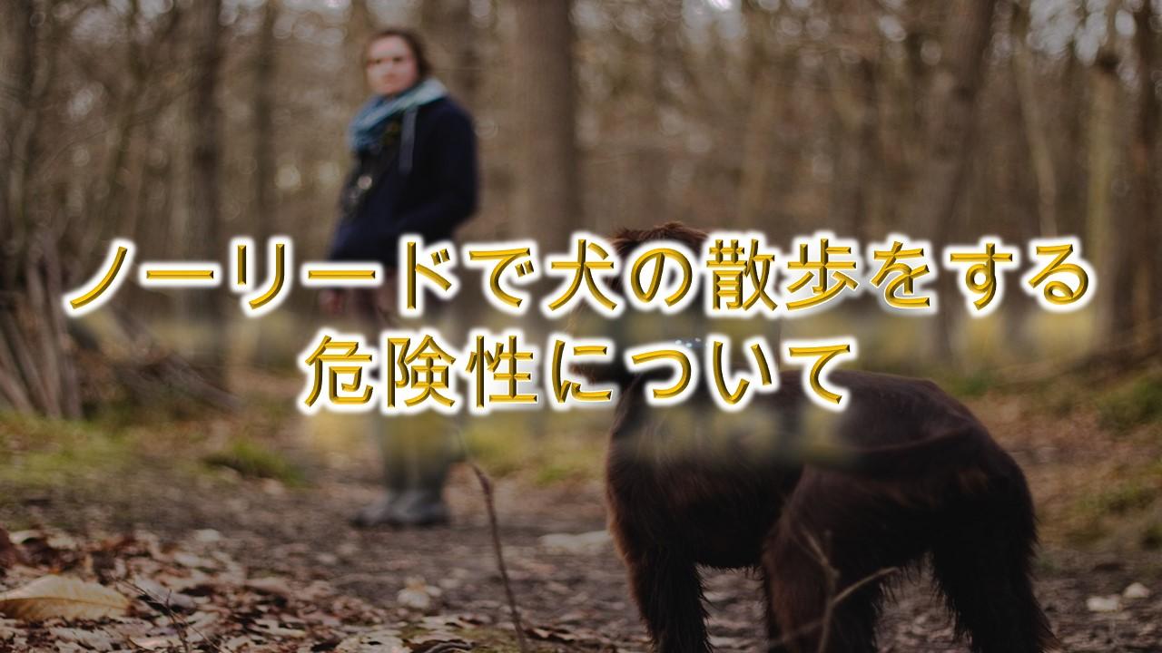 ノーリードで犬の散歩をする危険性について