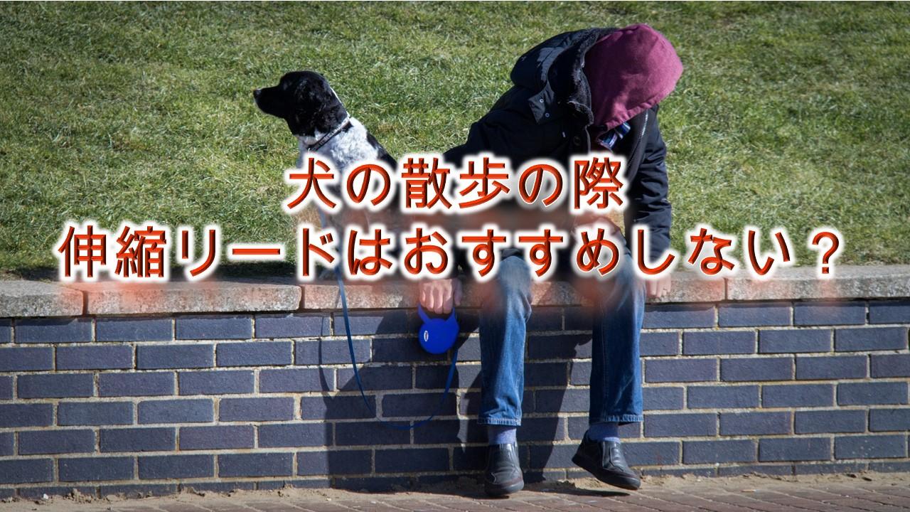 犬の散歩の際、伸縮リードはおすすめしない?【メリットとデメリットについて】