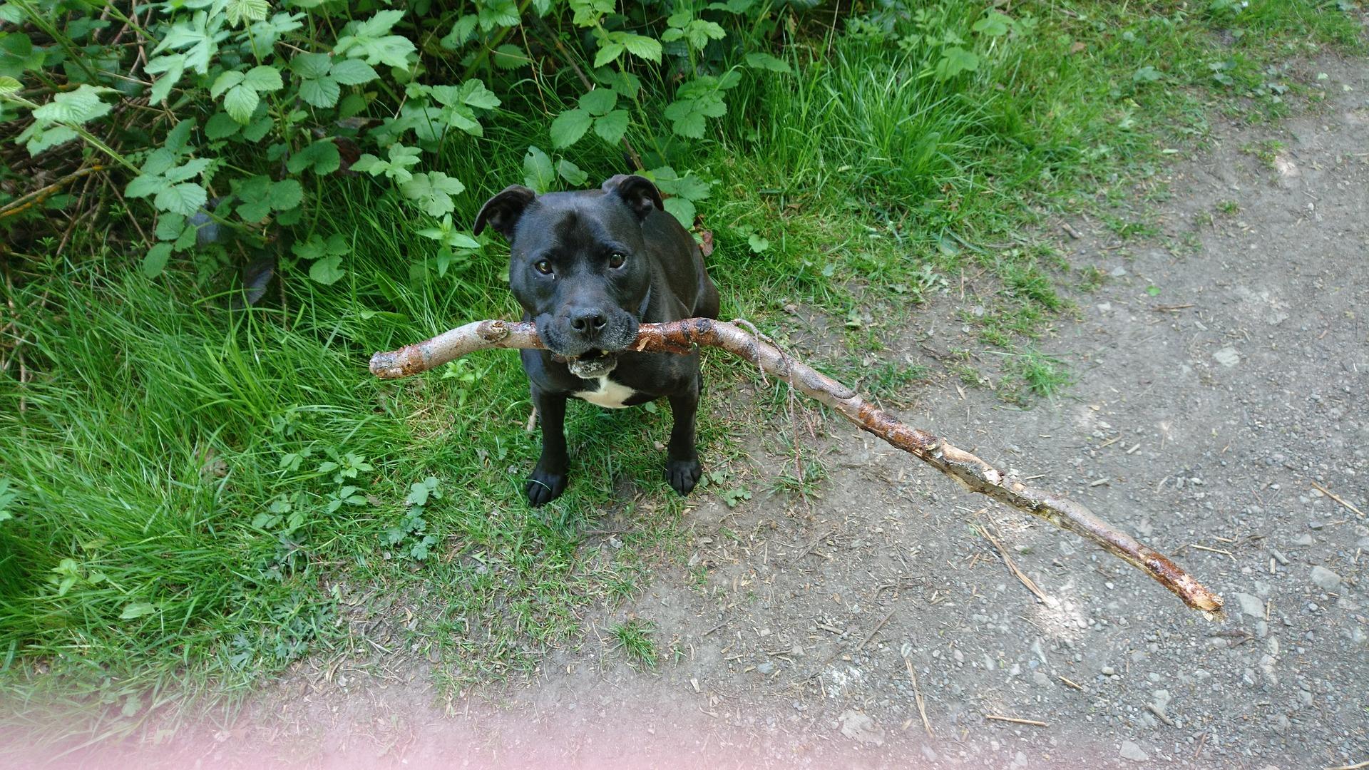 木を加えた犬