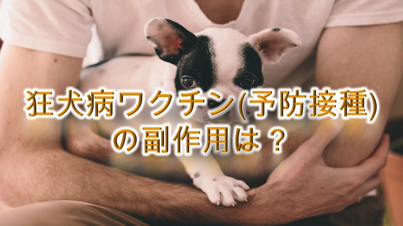 狂犬病ワクチン(予防接種)の副作用は?【注射するリスクや症状などを知る!】