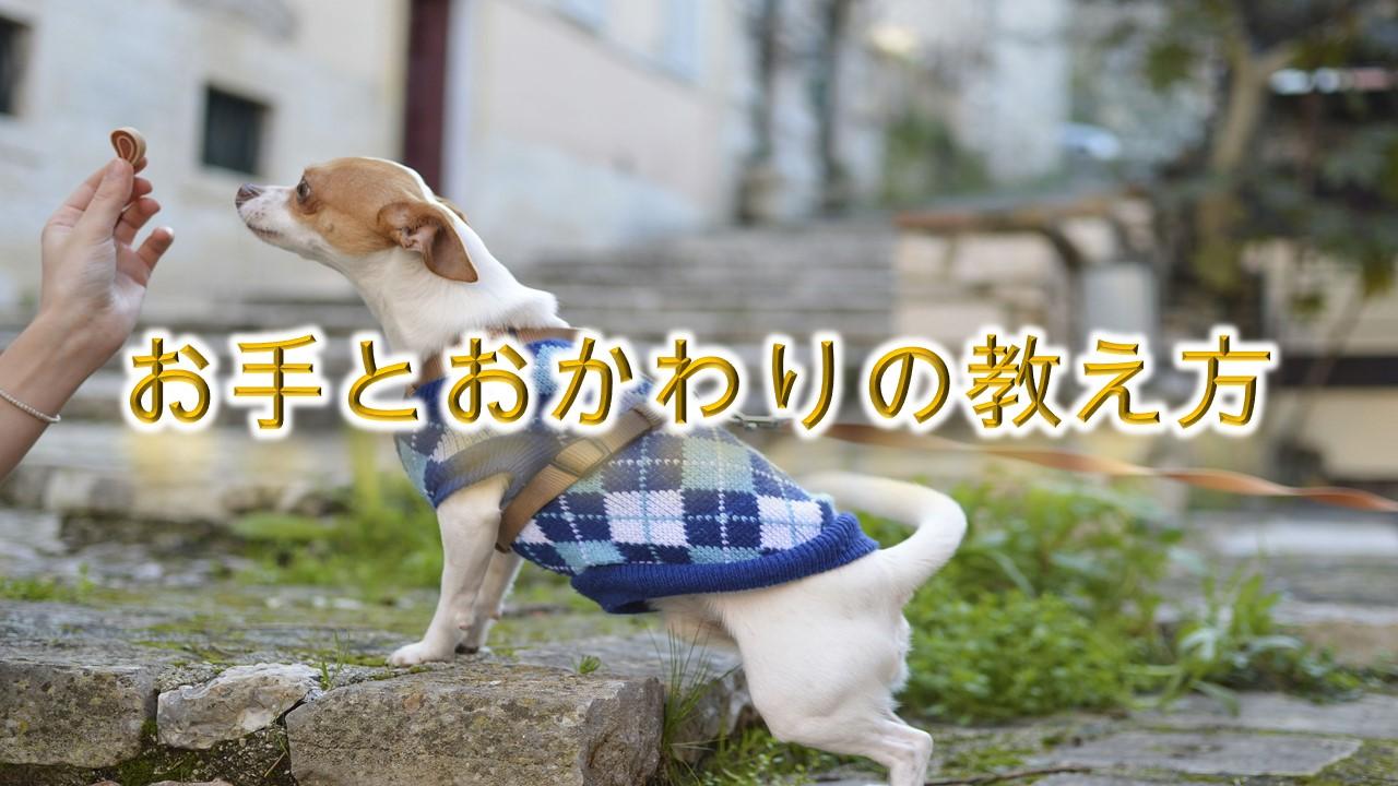 犬のしつけ方法【お手とおかわりの教え方】