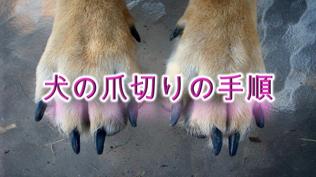 犬の爪切りのやり方【安全に犬の爪を切る方法や切り方のコツも紹介!嫌がる犬や暴れる犬でも大丈夫。】