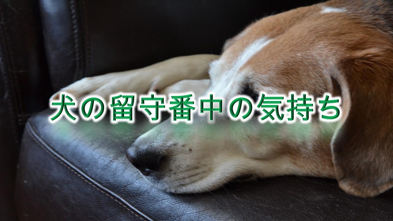 犬の留守番中の気持ち【部屋の電気は消さない方がいい?】