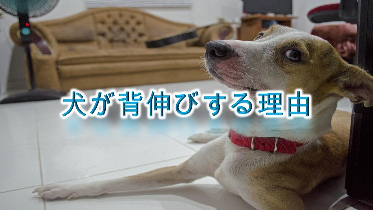 犬が背伸びをする5つの理由