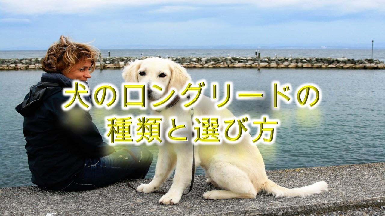 犬のロングリードの種類と選び方!【そもそも長いリードはおすすめできない?】