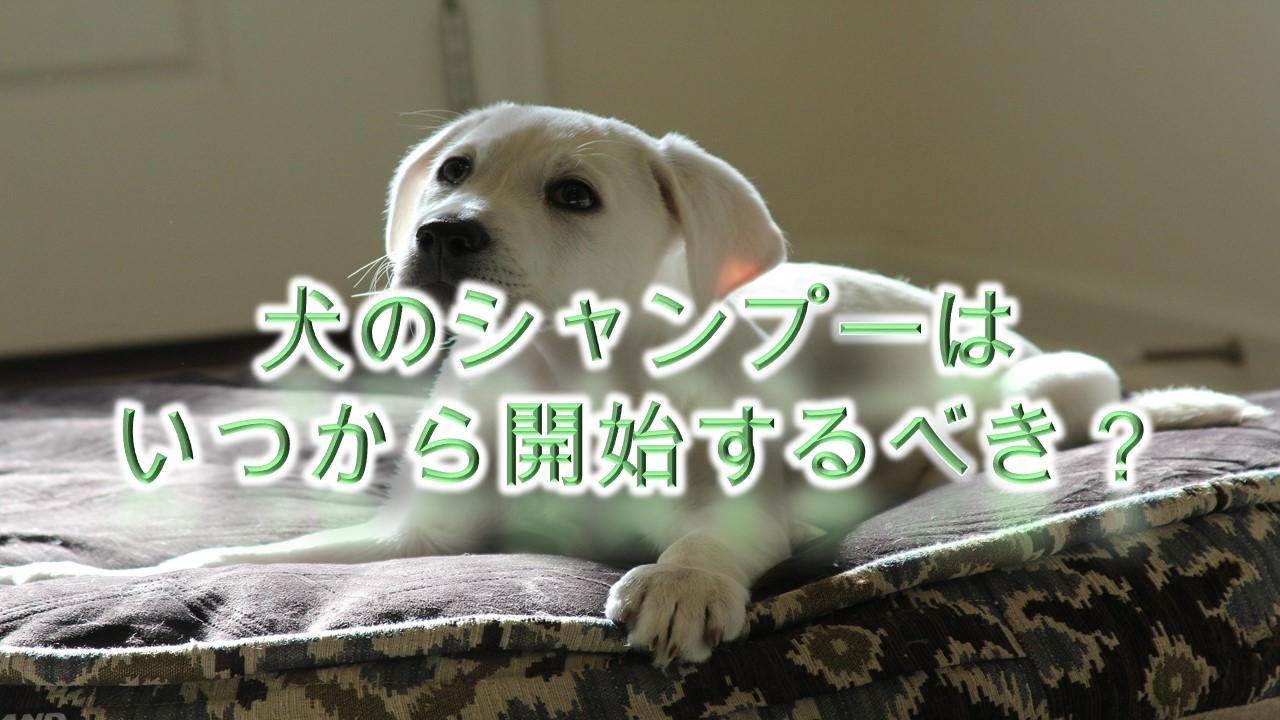 犬のシャンプーはいつから開始するべき?【シャンプーできない子犬期間のお手入れ方法も紹介】