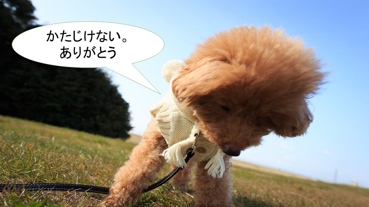 ミックス犬「チワプー」ってどんな子犬?【値段や性格、特徴をまとめました!】