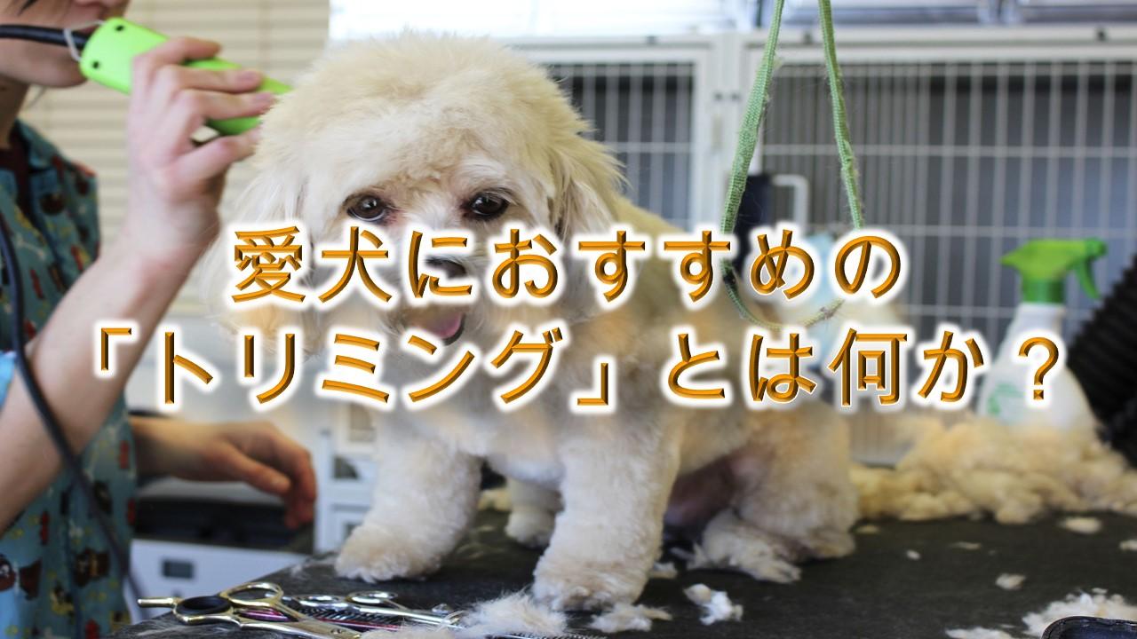 トリミングとは何か。【その意味や、愛犬におすすめの理由なども解説!】