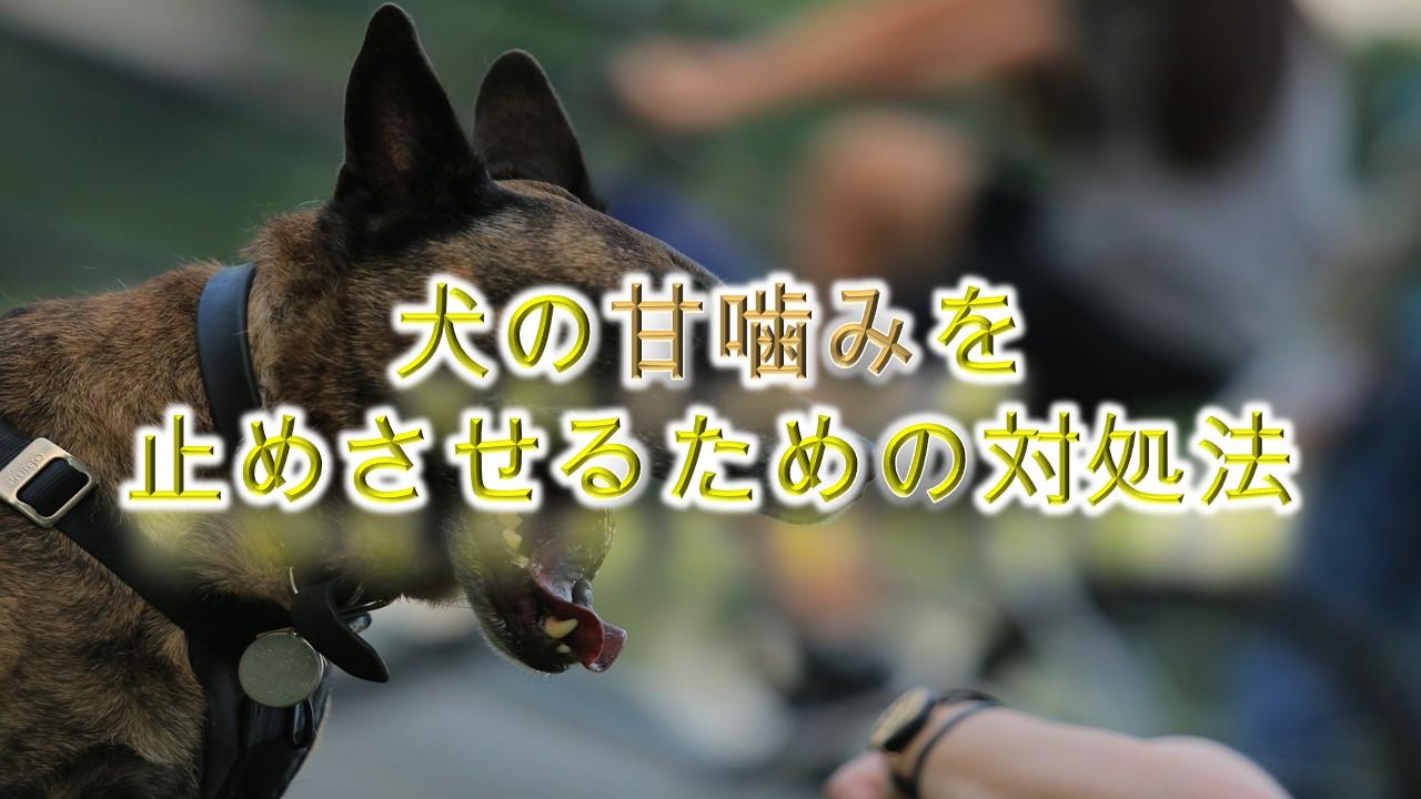 犬の甘噛みを止めさせる方法【犬の甘噛みの適切なしつけ方や対処法】